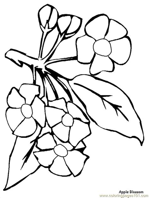 printable coloring pages of realistic flowers realistic flower coloring pages printable coloring pages
