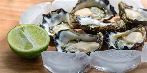 Oyster Health health benefits of oysters for health