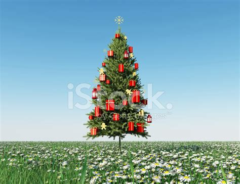 christmas tree on daisy field stock photos freeimages com