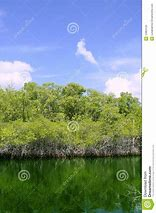 Image result for fl stock