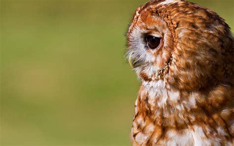 wallpaper cute owl hd cute owl backgrounds hd desktop wallpapers 4k hd