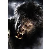 Werewolf  Werewolves Photo 8530418 Fanpop