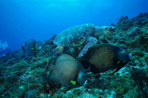 cozumel dive cozumel two tank scuba diving cozumel cruise excursions