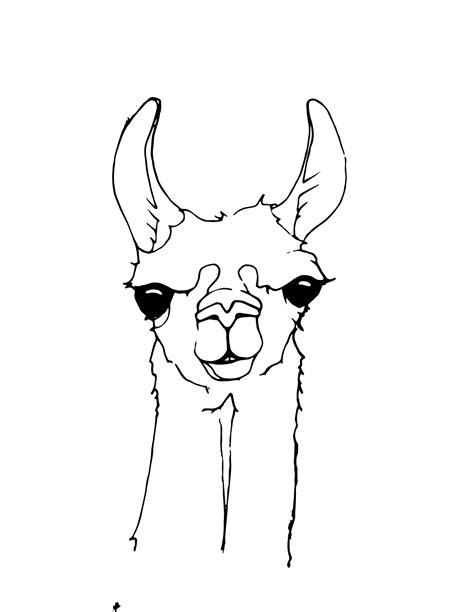 llama love maggie s earth adventures