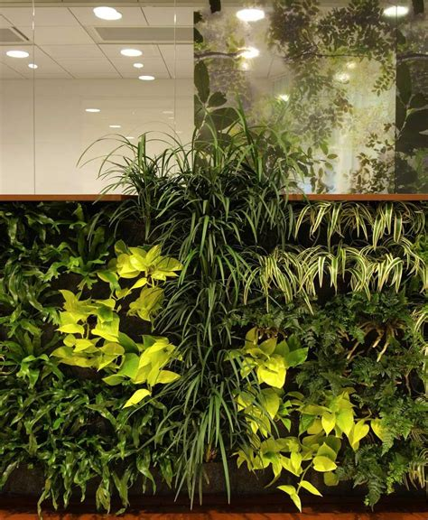 interior plant wall decorating with plants indoors indoor plant wall house