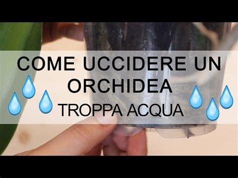 come si bagnano le orchidee come curare le orchidee in casa pollice verde nicola