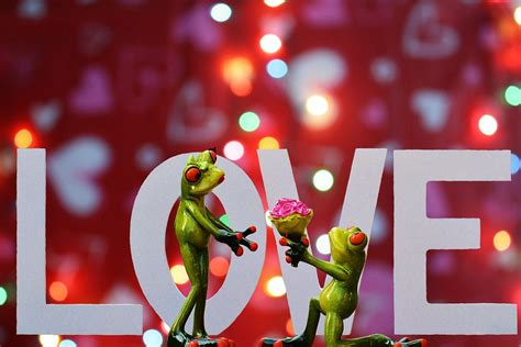 fiori san valentino fiori originali da regalare a san valentino