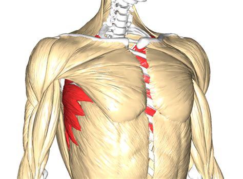 alimentazione muscoli aumentare la massa muscolare allenamento alimentazione