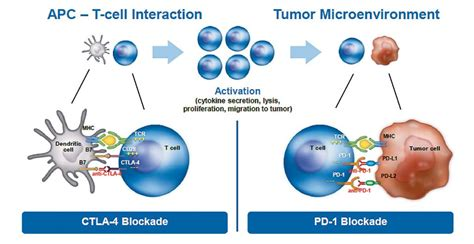 Oncology Cancer 4 In 1 C The Of Immunotherapy In Treating Solid Cancers