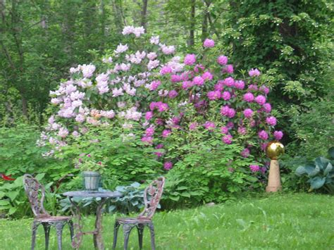 in the nineteenth century native american plants were more accepted in the english garden