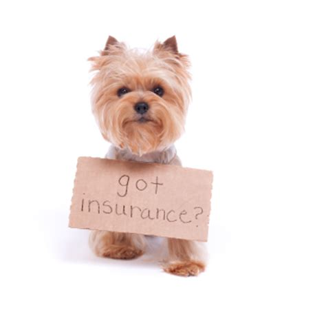 puppy insurance why you need pet insurance nuzzle your gps pet tracker