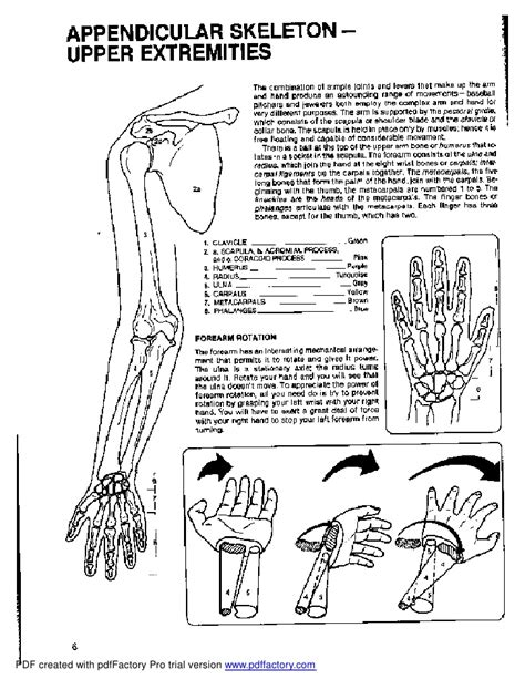 anatomy coloring book dover
