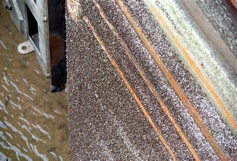 how to remove zebra mussels from a boat file zebra mussel infestation ormond lock jpg wikimedia