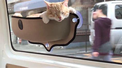 cat travels  car sitting  pocket youtube