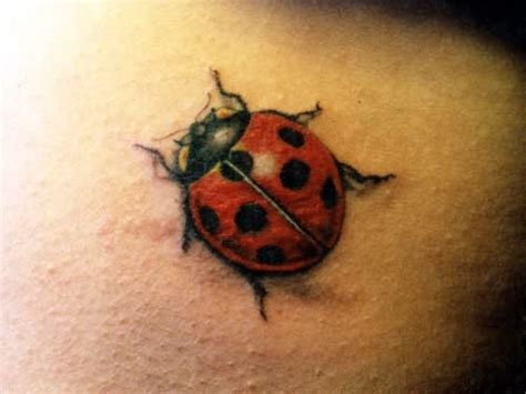 ladybird tattoo designs bug images designs