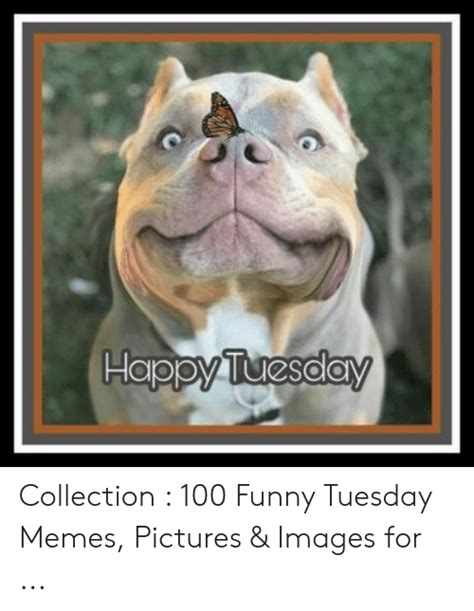 happy tuesday collection  funny tuesday memes pictures