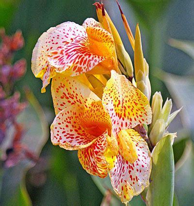 pflanzen im urlaub bewässern orchideen pflanzen orchideen pflanzen pflege und tipps