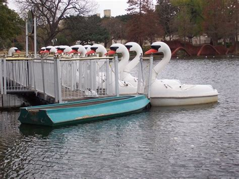 swan boats texas unusual swan boats picture of fair park dallas