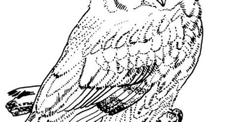 screech owl coloring page screech owl coloring page animals town free screech