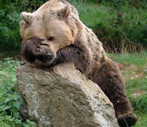 Tempat Tidur Cing duh 6 hewan ini terlihat nggemesin dengan posisi tidur