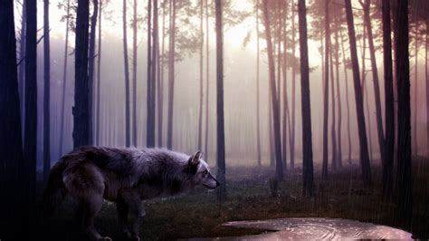 hd wallpapers 1920x1080 wolf wild wolf wallpapers hd wallpapers id 12539