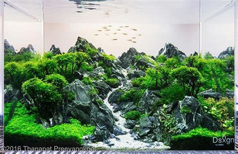 Aquascape Wood by Awesome Scape