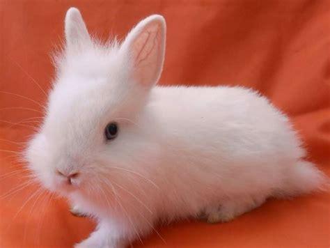 coniglio nano testa di coniglio testa di idee green