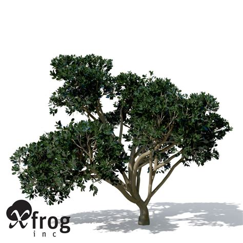 rubber fig rubber fig tree plant 3d max