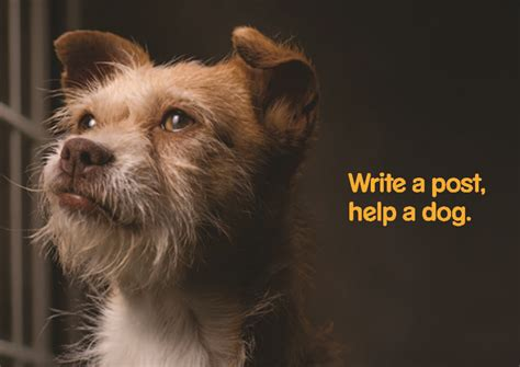 support dogs write a post help a