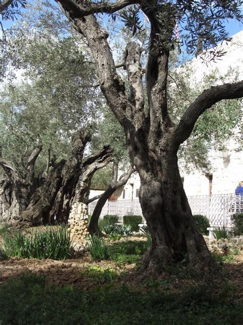 jetlogged garden  gethsemane