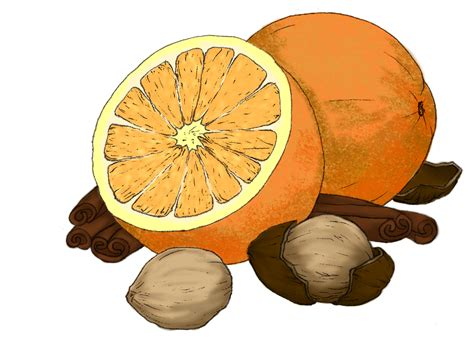 orange spice color jackie hahn illustration december 2010