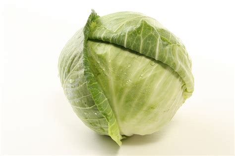 Cabbage Medicinal And Cosmetic Value by Cabbage Facts Health Benefits And Nutritional Value