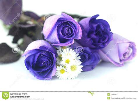 imagenes rosas violetas rosas y manzanillas violetas hermosas fotograf 237 a de