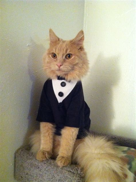 cat clothes tuxedo cat cat clothes by catclothing on etsy