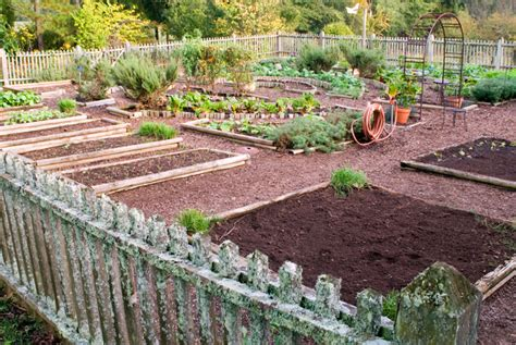 More About Gardening Ranking Vegetables For Efficiency Bonnie Plants
