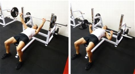 bench press free weights free weights bench press 28 images weight bench set 100 lbs weights home gym