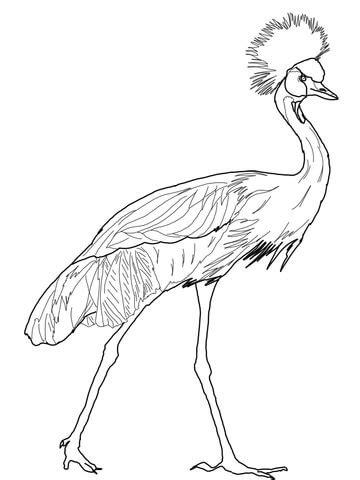 Dibujo de Grulla coronada cuellinegra para colorear