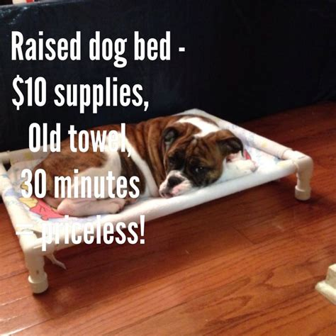diy raised dog bed pin by lisa haria on daily adventures of lola mcpouty face olde eng