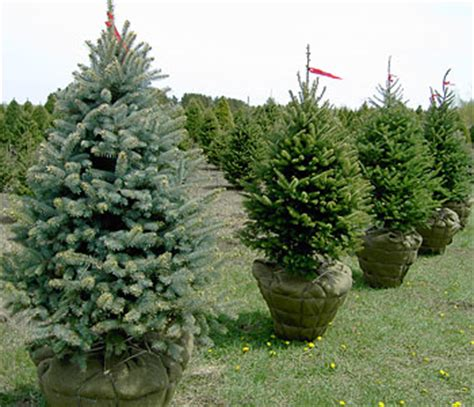 landscape trees pricing and availability
