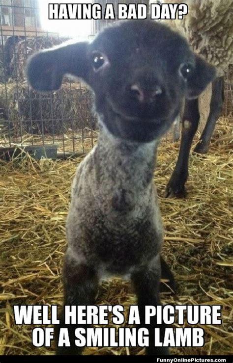 Funny Smile Meme - smiling lamb funny pic