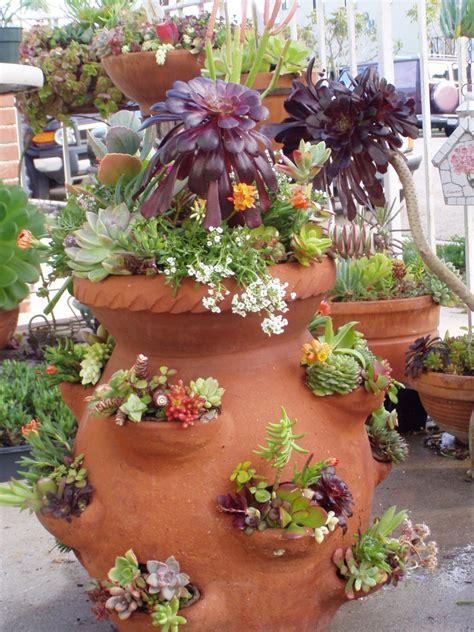 Succulents Pots For Sale by 1000 Ideas About Strawberry Pots On Pinterest