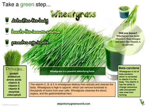 Detox Meaning In Tamil potent wheatgrass health benefits and cancer fighting