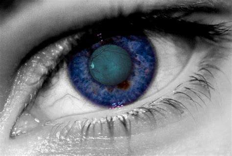 Essays On Iris by Research Paper On Iris Recognition Filetype Pdf