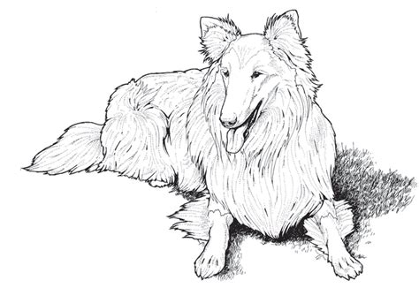 coloring books for adults dogs dogs coloring pages difficult coloring home