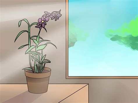 5 ways to prune orchids wikihow
