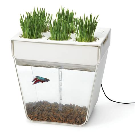 The Self Cleaning Aqua Farm Is Great For Lazy People Video Fish Tank Planter