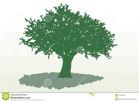 wide tree wide tree shadow royalty free stock photo image 11758575