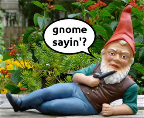 Gnome Meme - he s just y know we saw a chicken