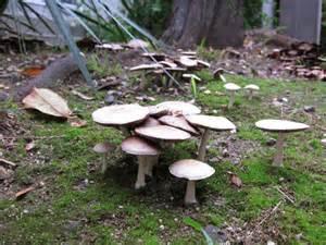 how to grow mushrooms in your backyard backyard mushrooms
