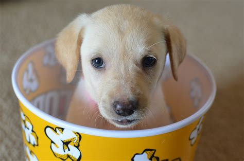 popcorn for dogs best friends in a list of
